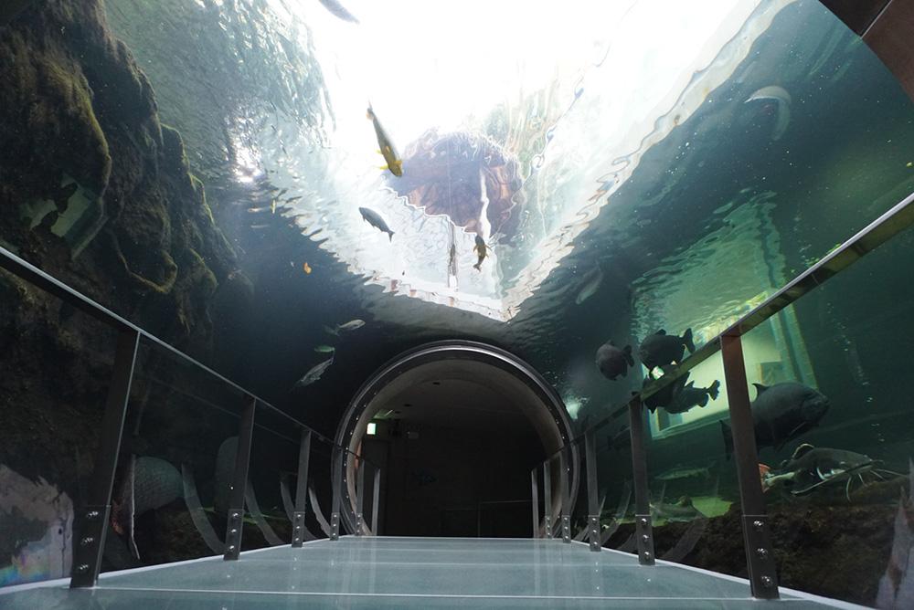 なかがわ水遊園 歩ける水槽 アマゾン 大田原市 観光 栃木県