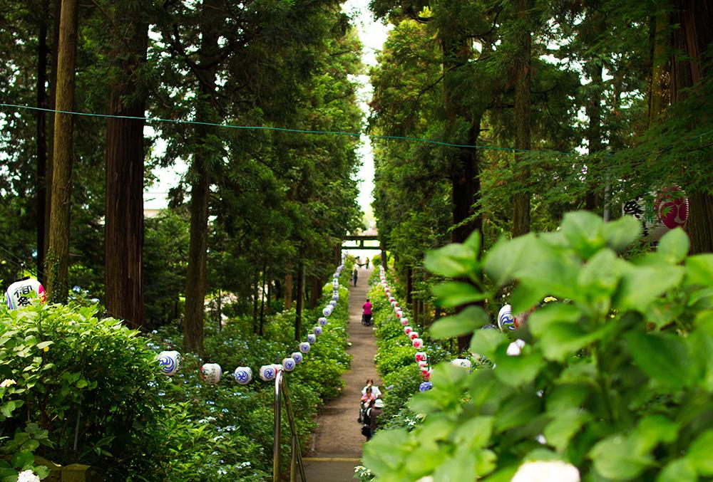 磯山神社 鹿沼市 文化財 階段 とちぎのしゅし