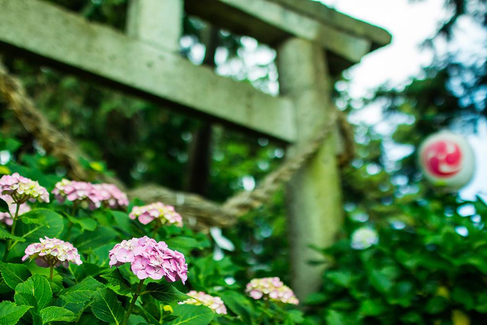 磯山神社 鹿沼市 鳥居と花 とちぎのしゅし