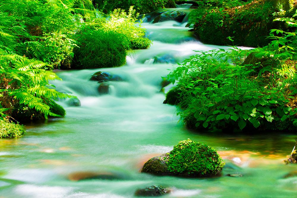 尚仁沢湧水群 川の流れ 栃木県塩谷郡塩谷町