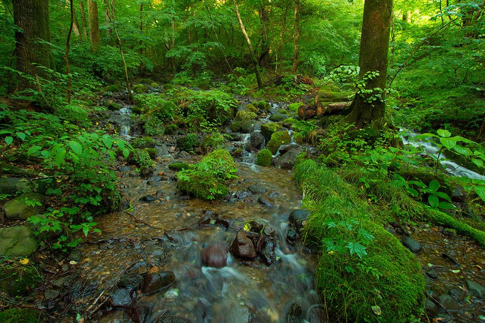 尚仁沢湧水群 さわと森 栃木県塩谷郡塩谷町