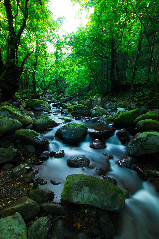 尚仁沢湧水群 水が綺麗 栃木県塩谷郡塩谷町
