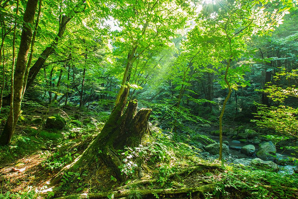 尚仁沢湧水群 枯れ木と新芽 栃木県塩谷郡塩谷町