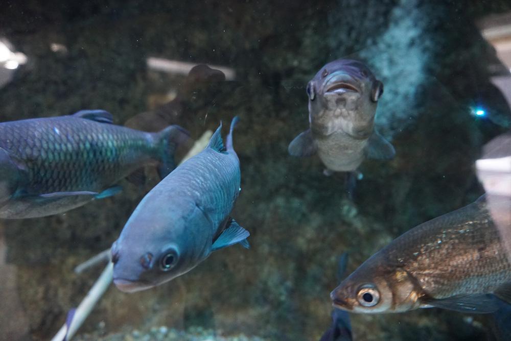なかがわ水遊園 とちぎにいる魚 栃木県大田原市