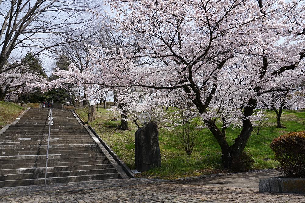 さくらと階段 嘉多山公園 佐野市 とちぎのしゅし