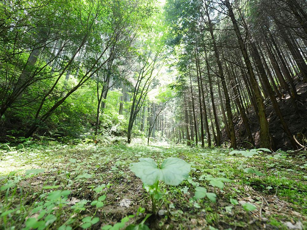 鷲子山 登山 栃木県 とちぎのしゅし