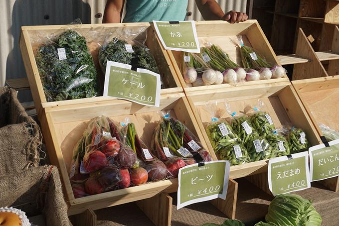 収穫野菜・下野市・吉田村まつり・とちぎのしゅし